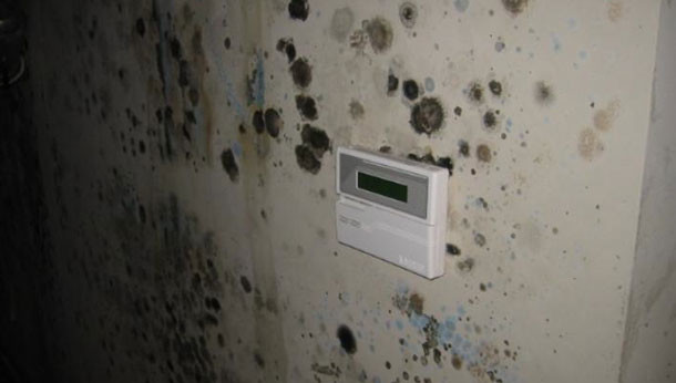 Mold inspection is it required licensed home inspector - What to do about mold ...